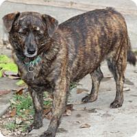 Adopt A Pet :: Marimba - adoption pending - Norwalk, CT