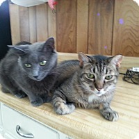 Adopt A Pet :: Kody & Knuk - Berkeley Hts, NJ