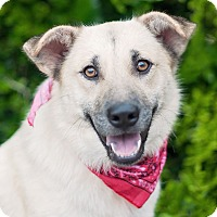 Adopt A Pet :: Lizzy - Kingwood, TX
