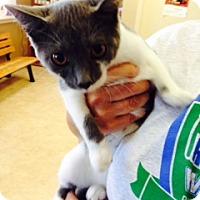 Adopt A Pet :: Zahara - Troy, OH