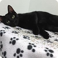 Adopt A Pet :: Ebby - Houston, TX