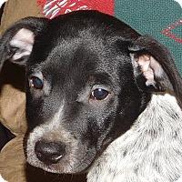 Adopt A Pet :: Cricket - MINNEAPOLIS, KS