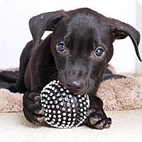 Adopt A Pet :: Prince Charming - Sudbury, MA