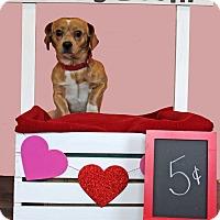 Adopt A Pet :: Peanut - Waldorf, MD
