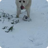 Adopt A Pet :: Bear - Gardner, IL