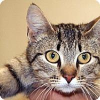 Adopt A Pet :: Sky - Wildomar, CA