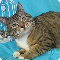 Adopt A Pet :: SAHARI - New Cumberland, WV