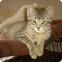 Adopt A Pet :: LEEVON - Medford, WI