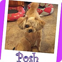 Adopt A Pet :: Posh Franklin - Pataskala, OH