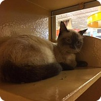 Adopt A Pet :: 1-27 - San Antonio, TX