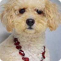 Adopt A Pet :: Razzleberry - Dublin, CA