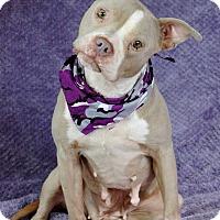 Adopt A Pet :: Franzi - Lawrenceville, GA