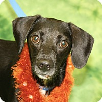 Adopt A Pet :: Malcolm - Jackson, MI