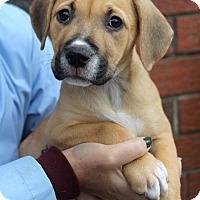 Adopt A Pet :: Beth - Harrison, NY