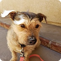 Adopt A Pet :: Tank-Take me home! - Victorville, CA