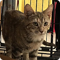 Adopt A Pet :: Snickers - East Brunswick, NJ