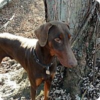 Adopt A Pet :: Rudy - Columbus, OH