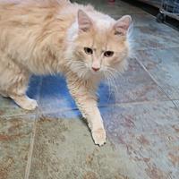Adopt A Pet :: Pedro - Orlando, FL