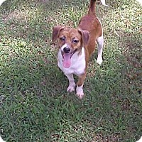 Adopt A Pet :: Donnie - Hollis, ME