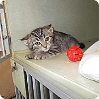 Adopt A Pet :: Lonnie - Centre Hall, PA