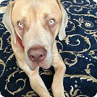 Adopt A Pet :: Buster - Lancaster, PA