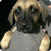 Adopt A Pet :: Patrick#2M - geneva, FL