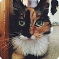 Adopt A Pet :: Poosh - Vancouver, BC