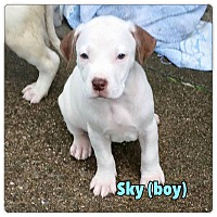 Adopt A Pet :: Sky - North Olmsted, OH