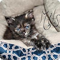 Adopt A Pet :: Mitsi - Bentonville, AR
