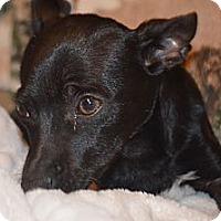 Adopt A Pet :: Tippi - Weeki Wachee, FL