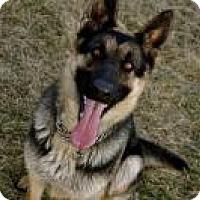 Adopt A Pet :: LUNA - Nampa, ID
