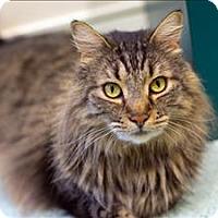Adopt A Pet :: Rover - Portland, OR