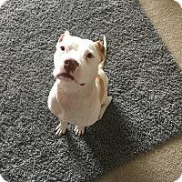 Adopt A Pet :: Eli - Charlotte, NC