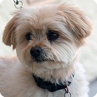 Terrier (Unknown Type, Small) Mix Dog for adoption in Palmdale, California - Goody Boy