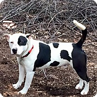 Adopt A Pet :: Johnny B - Creedmoor, NC