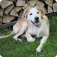 Adopt A Pet :: Buttercup - Adopted! - Ascutney, VT
