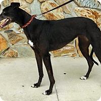 Adopt A Pet :: Winnie - Tampa, FL