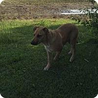 Adopt A Pet :: Simba - Parkton, NC
