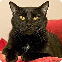 Adopt A Pet :: Wayne - Cashiers, NC