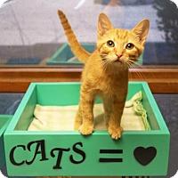 Adopt A Pet :: Chevy - Tempe, AZ
