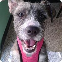 Adopt A Pet :: Nikita - Thousand Oaks, CA