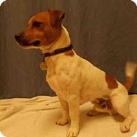 Adopt A Pet :: *GOMEZ - Upper Marlboro, MD