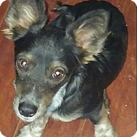 Adopt A Pet :: Chino - Woodland, CA