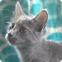 Adopt A Pet :: Allen - Hagerstown, MD