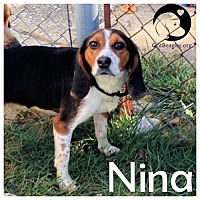 Adopt A Pet :: Nina - Novi, MI