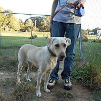 Adopt A Pet :: Josie - Monroe, NC