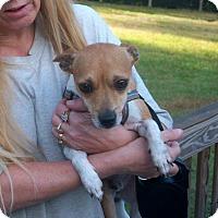 Adopt A Pet :: Nick - Homosassa, FL