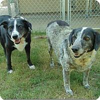 Adopt A Pet :: Rebel - Ocean Ridge, FL