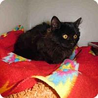 Adopt A Pet :: OLIVIA - McKinleyville, CA