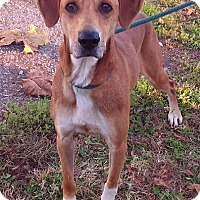 Adopt A Pet :: Rascal - Metamora, IN